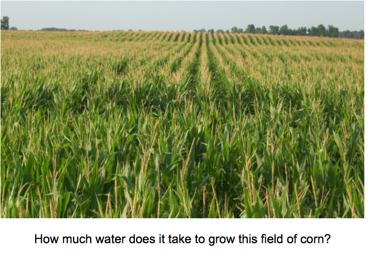 How much water does it take to grow this field of corn?